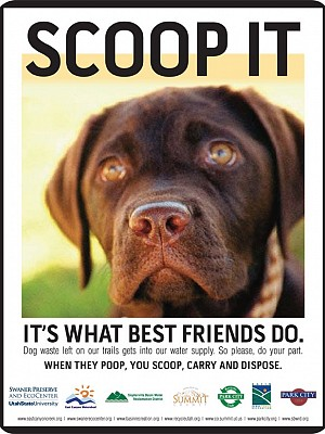 Flyer: Scoop It