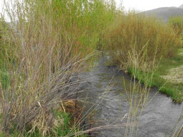 East Canyon Creek Stream Enhancement Project - 2009